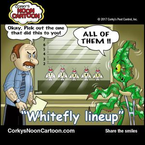 Whitefly00005