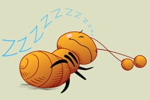 """Ants take hundreds of """"Power Naps"""" to get through their day."""