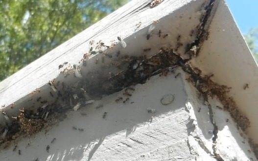 When The Rain is Gone. Termite Swarms Begin.