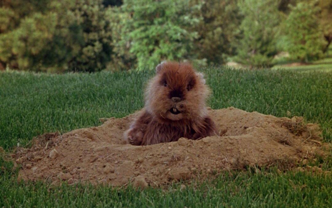 When it comes to Gophers; If you want Peace, Prepare for War!