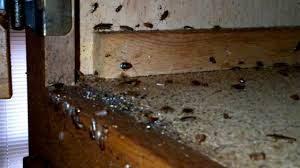 cockroach infestation in kitchen