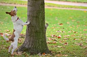 DIY Squirrel Control Service For The Landscape