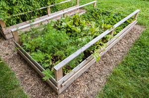 DIY Gopher Control Service For The Garden