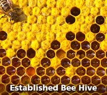 Established Bee Hive