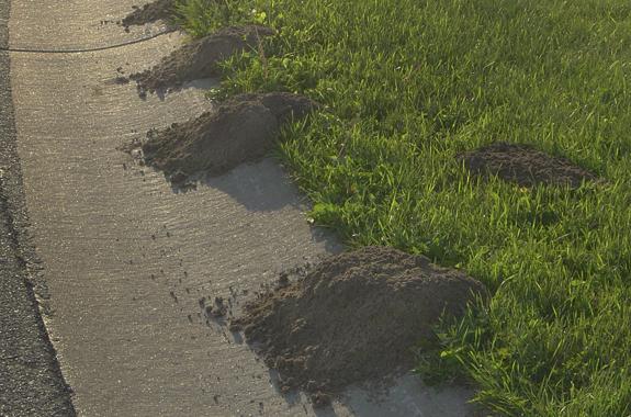 ants san diego