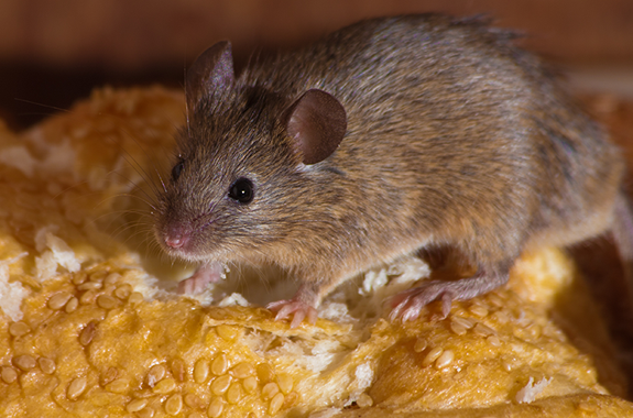 Mouse Bread