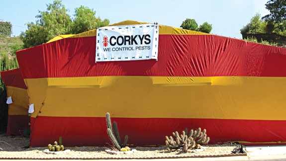Fumigation Corky S Pest Control Services Termite Services In San Diego Los Angeles Pest Control Riverside Pest Control