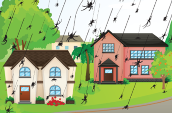 How do spiders get in your home?