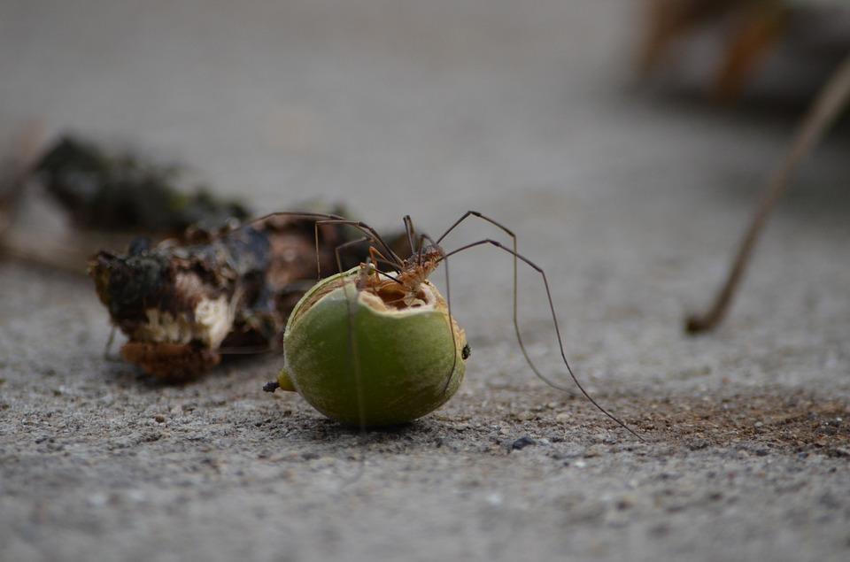 SPIDER ID : Spider Identification : Identify Spiders