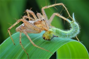 spider-eating-insects-3479732_1280