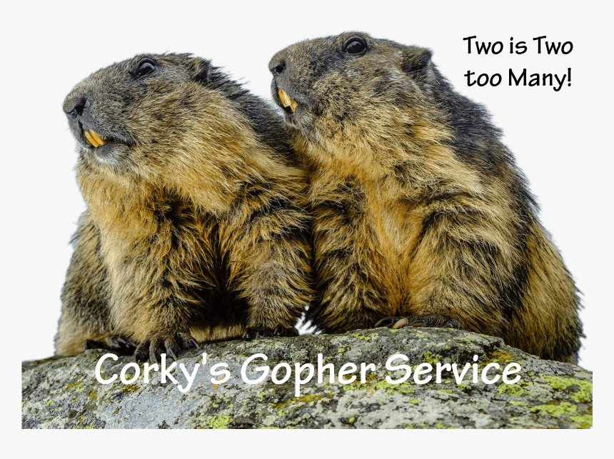 Where Did These Gophers Come From and Why My Yard?