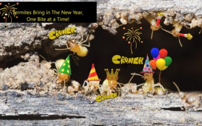 """It's, """"Party On"""" for Termites!"""