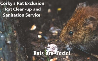 Beware! Rats are Dirty and Leave Toxic Chaos Behind.