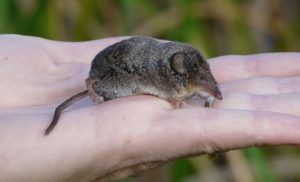 shrew-in-hand