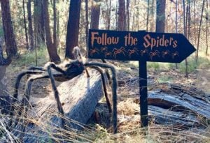 follow-the-spiders-2