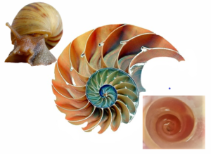 snail-shell-collage-whole-and-inside