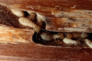 termite-gallery-in-wall