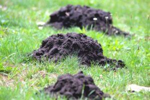 mole-hill-3615125_960_720