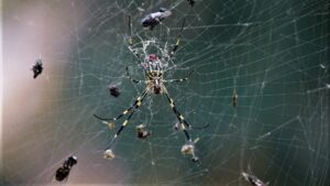 spider-in-web-with-food-4631652_1280