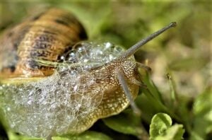 snail-with-slime-bubbles-2-2-21