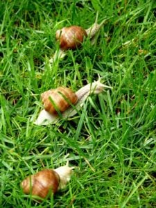 snails-in-the-lawn-blog-2-3-21