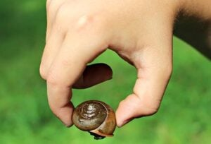 pick-up-snail-shells-2-2-21
