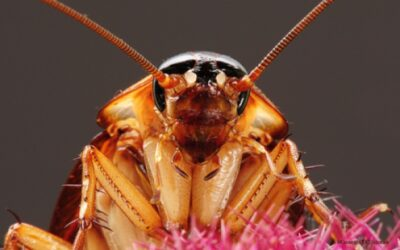 Roaches, Here Today! – Here Tomorrow?  Not If We Can Help It!