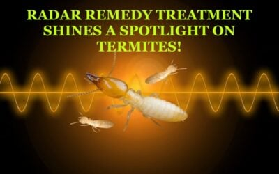 THEY CAN'T RUN AND THEY CAN'T HIDE. A SPOTLIGHT ON TERMITES!