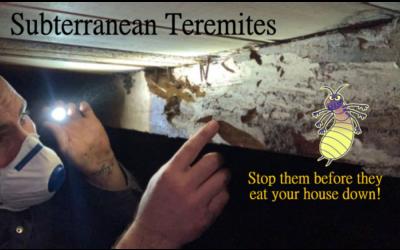 Subterranean Termites: Denizens of the Underworld