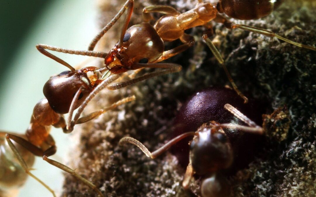 Ants: Farmers, Engineers, Warriors, Workers and Royalty