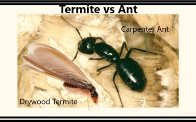 Termites vs The Human Habitat     …………………..Know The Opposition!