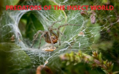 Above All Else, Spiders Are Predators.