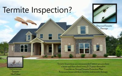 Is A Termite Inspection Really Necessary?