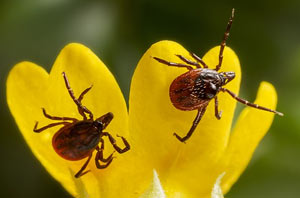 Helpful things you can do to prevent pests in your landscape.