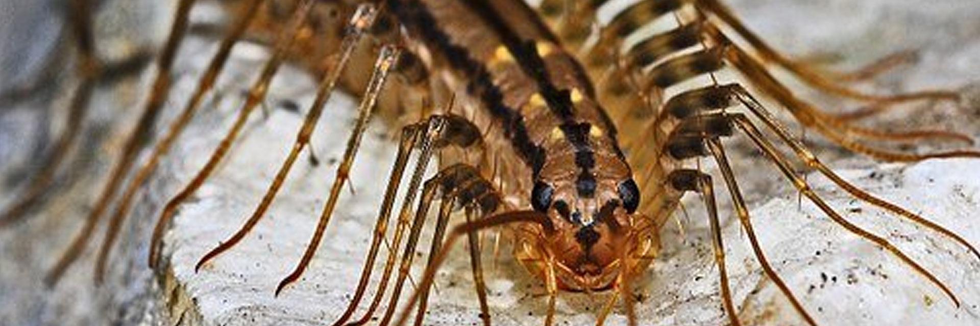 Corky's Centipede Control Service