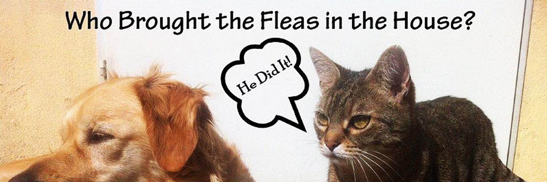 CORKY'S FLEA CONTROL SERVICE
