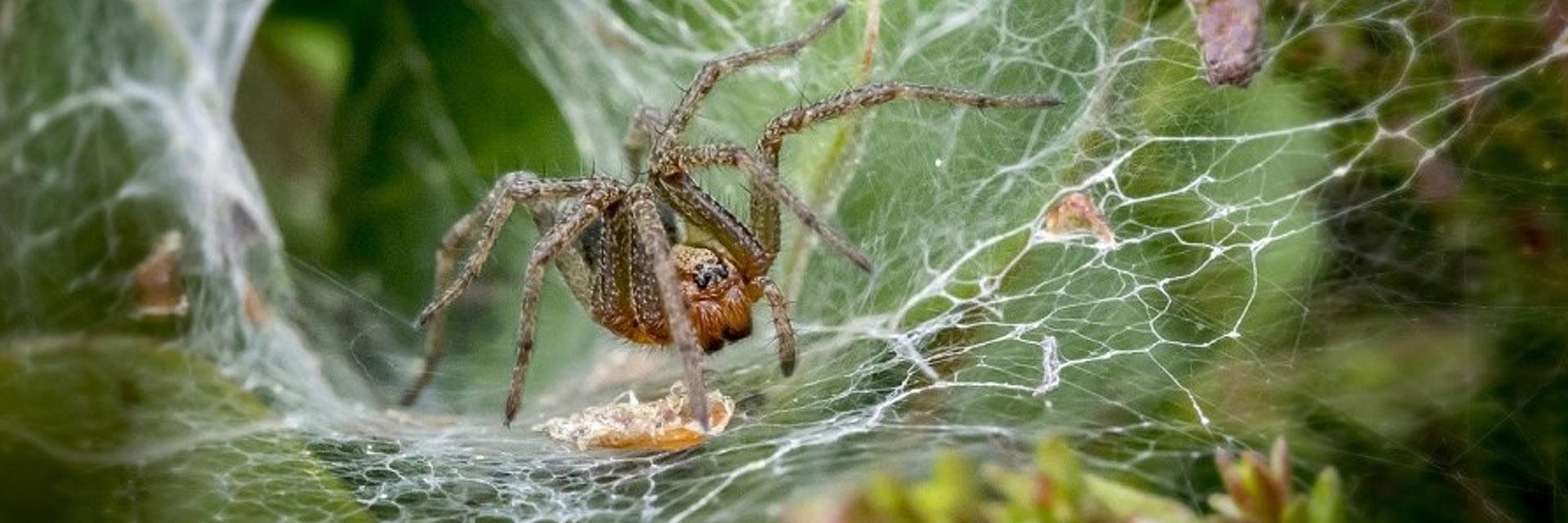 Corky's Spider Control Service
